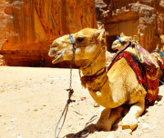 Petra From Eilat - Mazada Tours & Travel Package